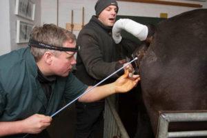 Gynaekologie-beim-Pferd
